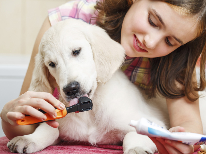 cómo cuidar a tus mascotas