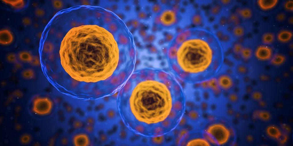 celulas-eucariotas-como-son