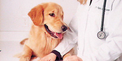 cuidado de perros y gatos
