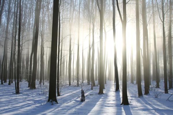 bosques caducifolios en invierno