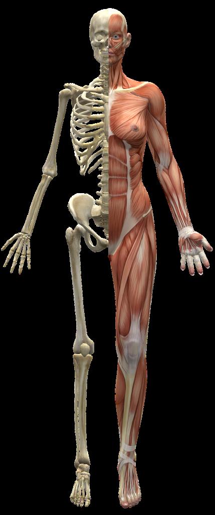 qué es un kinesiólogo