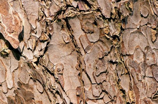 madera de caoba